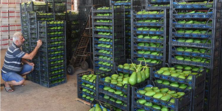 Турция за пръв път изнася авокадо за България – obzornews
